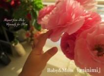 ベビー&ママ 『minimi』