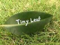 tiny leaf