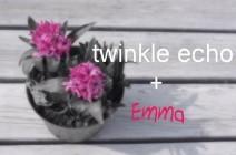 twinkle echo