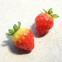 虹のお菓子屋 nut-meg