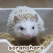 soranohara