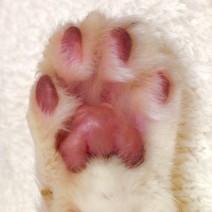 猫の手工房