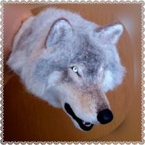 Hiding-Wolf