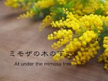 ミモザの木の下で