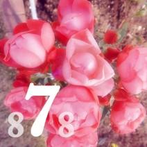 8NANA8