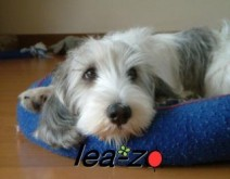 lea-zo(レアゾー)