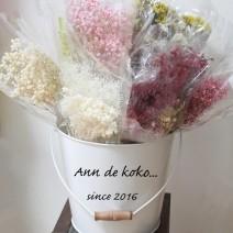 Ann de koko...
