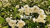 libre'