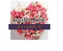 LuciferRose