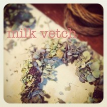 milk vetch