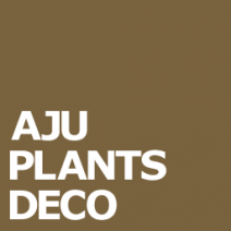 AJU PLANTS DECO