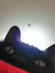 猫の目工房