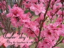 flower*sky