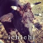 ichichi