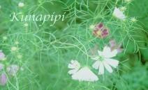 kunapipi(クナピピ)
