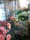 花  ゆすら