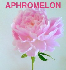 APHROMELON