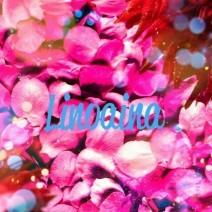 Lino aina