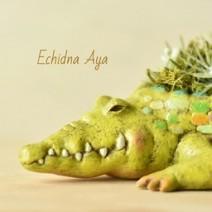Echidna-Aya