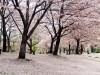 京都エシカルマルシェ
